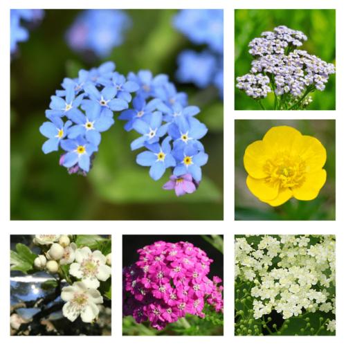 Nurturing Me - flower essence - Rebecca Veryan Millar