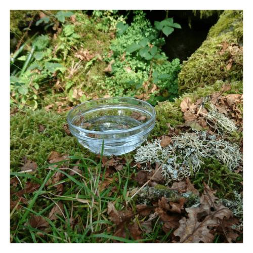 Serenity - flower essence - Rebecca Veryan Millar