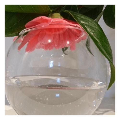 Unconditional Huggles - flower essence - Rebecca Veryan Millar