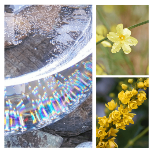 Winter's Gift - flower essence - Rebecca Veryan Millar