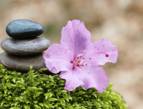 Flower essences are a go-to resource for personal development and spiritual growth.