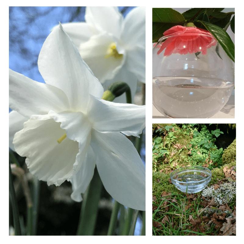 Frazzle Free - flower essence - Rebecca Veryan Millar