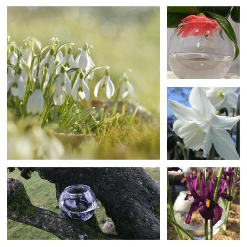 Fresh Start - flower essence - Rebecca Veryan Millar