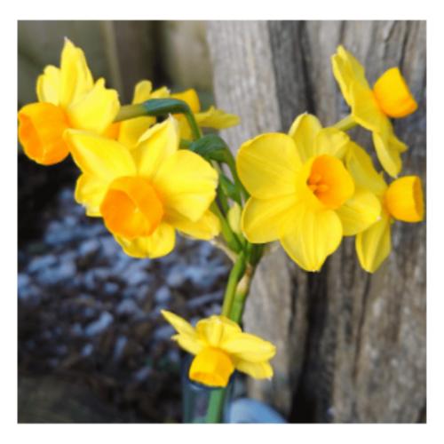 Hearing Our Voices - flower essence - Rebecca Veryan Millar